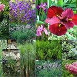 Mix piante da laghetto