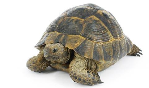 Mangimi tartarughe terrestri