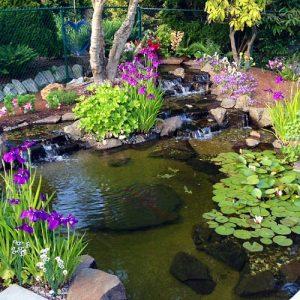 Pacchetti pond