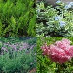 Mix piante palustri da fiore
