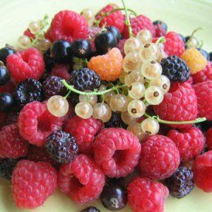 Piante di piccoli frutti