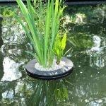 Isola galleggiante per piante (35 ø cm rotonda)